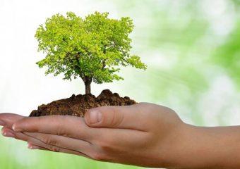 Servidores da área do meio ambiente e SINDIPÚBLICO denunciam projeto à CVM